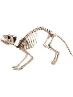 Macska Csontváz Dekoráció